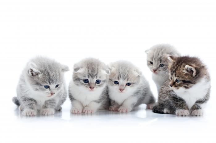 Kočky lidstvo chová už odpradávna.