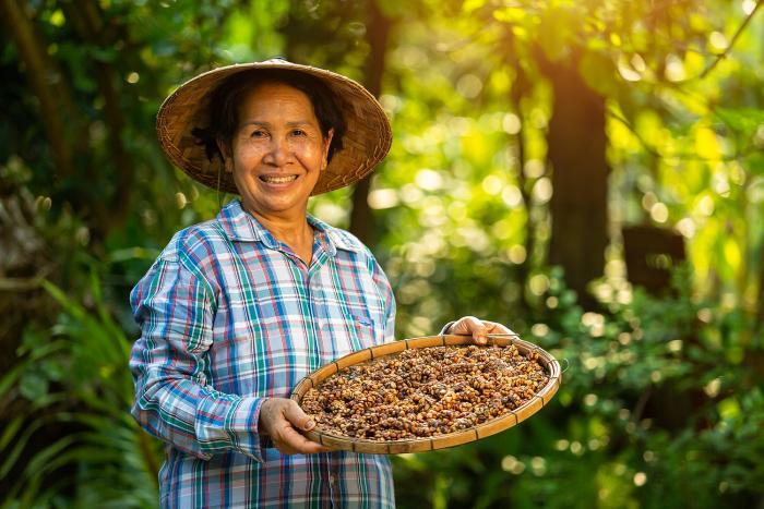 Cibetková káva je fermentovaná v těle lasičky.