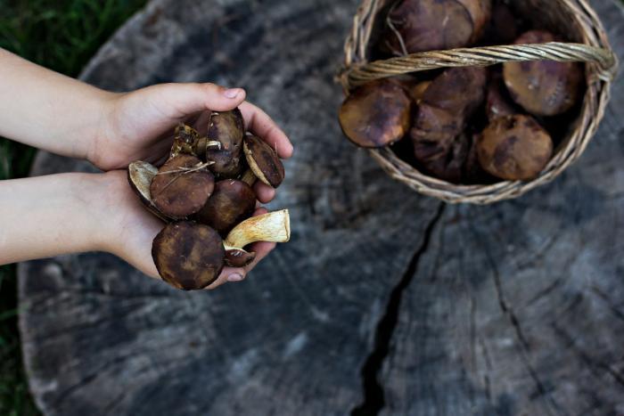 Češi houby milují. Ale víme o nich dost?