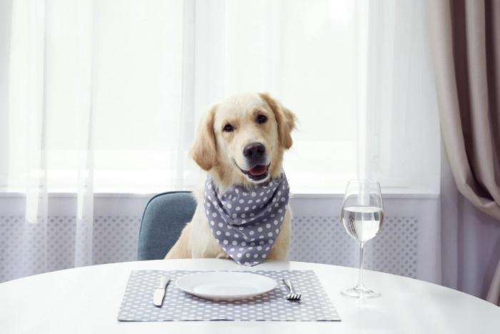 Co pes smí a nesmí jíst? Máme pro tebe stručný přehled.