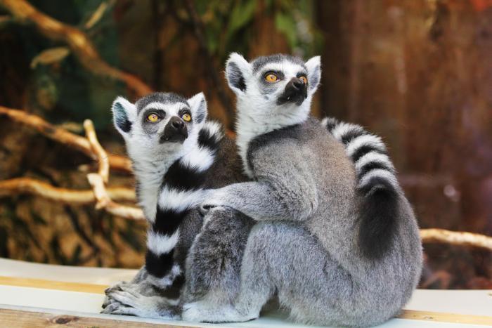 Zoologické zahrady jsou stále velkým lákadlem pro malé i velké.