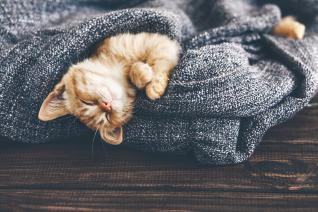 Kočka ti nabídne takovou dávku roztomilosti, že to nebudeš chápat.