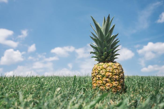 Ananas obsahuje bromelin, který pomáhá bojovat s nadbytečnými tuky.