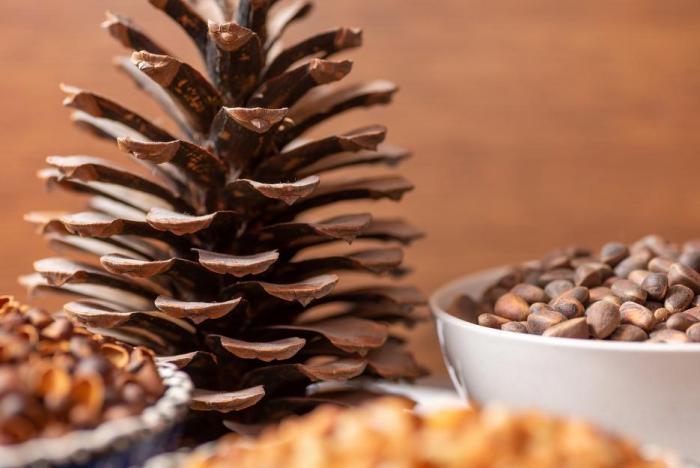 Borovice pinie, z níž piniové oříšky pocházejí, jsou až 30 m vysoké stromy s korunou širokou až 8 m.