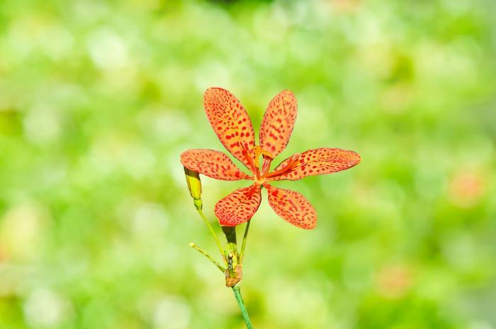 Neboj se vyzkoušet léčivé rostlinky a bylinky.