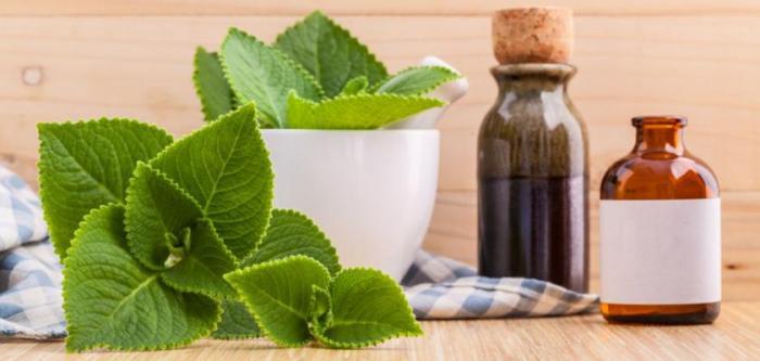 Než se rozeběhneš do lékárny, vyzkoušej léčivé rostlinky.