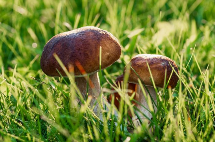 Znáš všechny jedlé houby?
