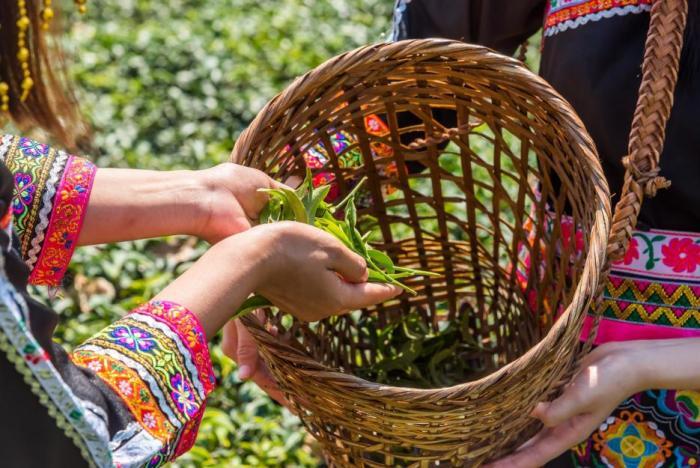 Zelený čaj je nabitý antioxidanty.