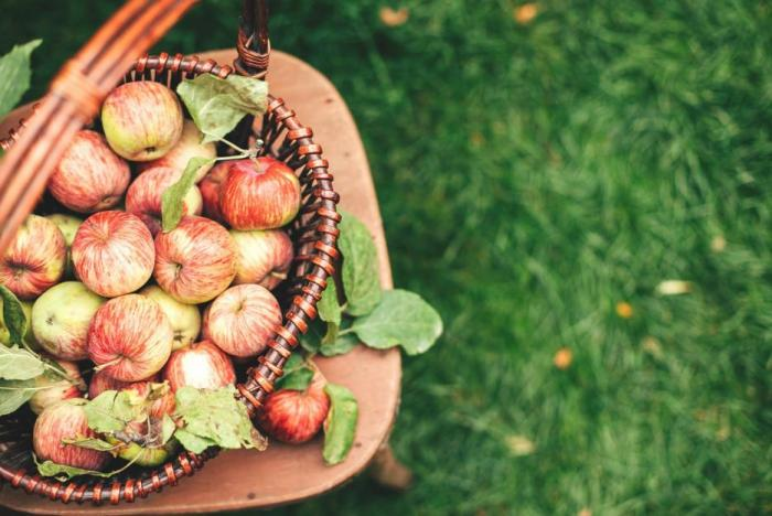 Jablka jsou bezva součást jídelníčku, ale nesmíš jíst jen je.