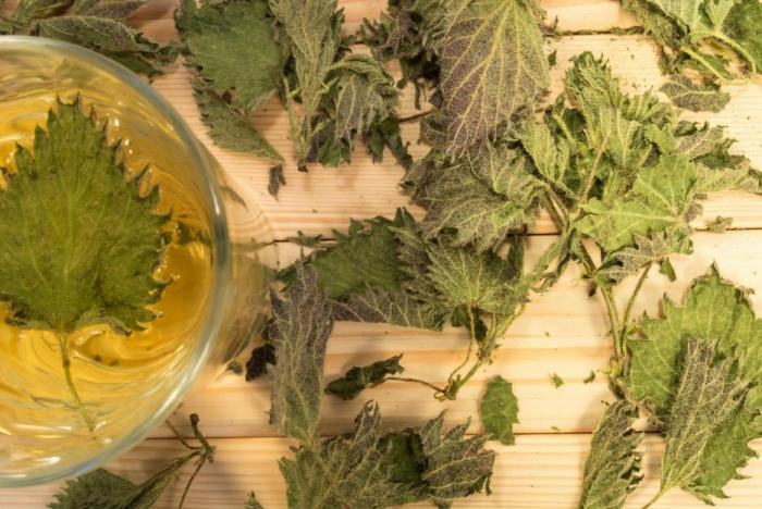 Udělej si vlastní kopřivový čaj. Pomůže ti hned v několika ohledech.