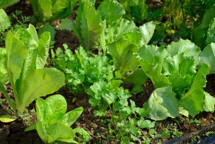 Pro vlasy je důležité přijímat vitamíny a minerály ze zeleniny.