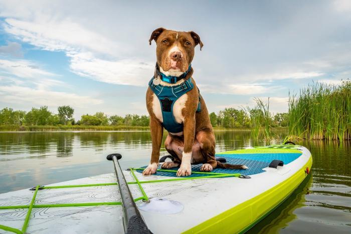 Na paddleboard můžeš vzít třeba i psa nebo dítě.