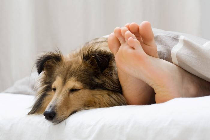 Spaní se psem v posteli je podle odborníků zdravé!