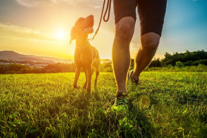 Při výběru psa nejen z útulku se zajímej o rasu a náročnost chovu.