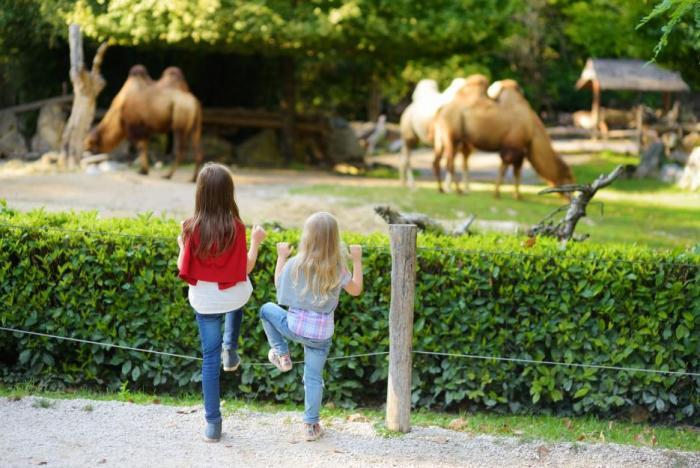 Děti zoo milují.