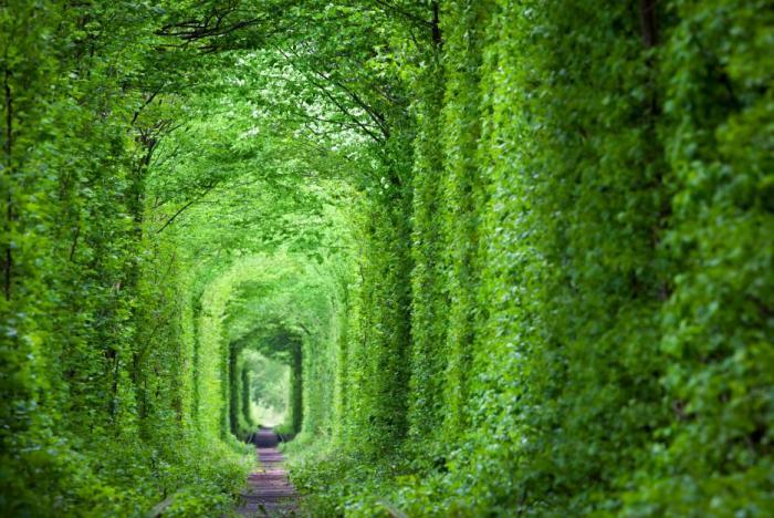 Tunel lásky je vyhledávanou atrakcí.