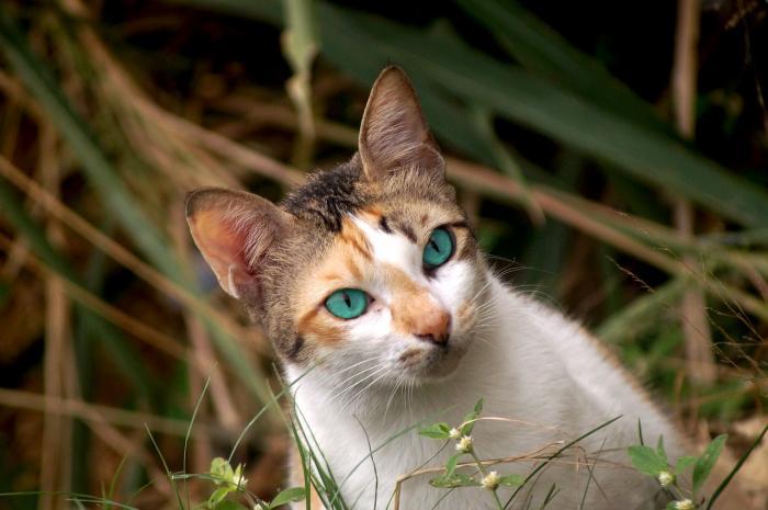 Kočky dokážou žít i bez člověka.