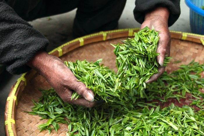 Zelený čaj obsahuje spoustu antioxidantů, které jsou tělu prospěšné.